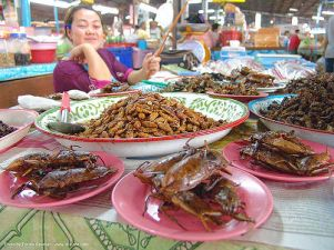 18320773-insects-giant-waterbugs-market-food-thailand