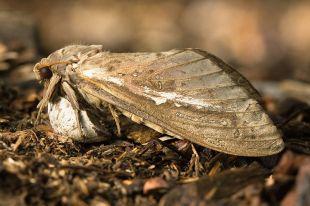 Exemple de papillon de nuit