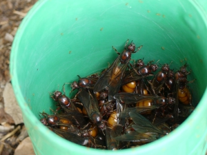 Bikita fourmis
